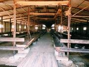 Продам молочную ферму, можно под откорм