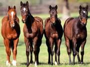 Лошади,  коровы на согым!