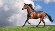 Продам молодняк лошадей